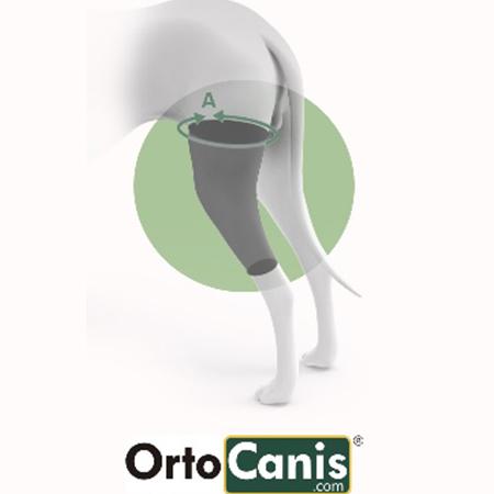 Ortocanis Knee Brace | Durham Dogs